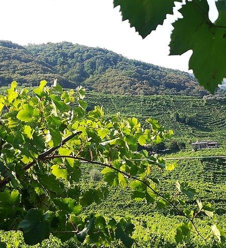 vigna_vigneto_degustazioni_vino_2
