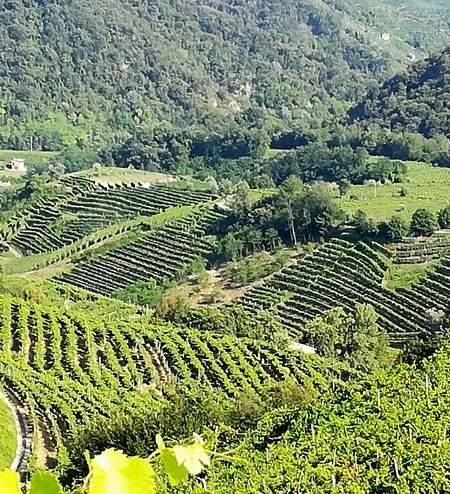 vigna_vigneto_degustazioni_vino_3